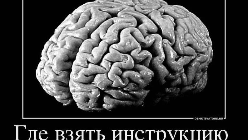 Несколько интересных фактов о мозге